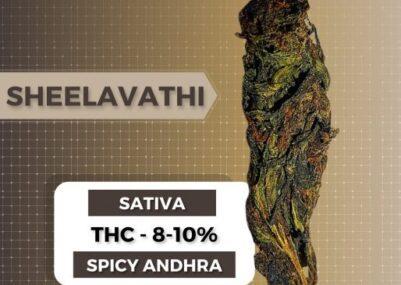 Sheelavathi Weed Strain